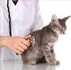 Ветеринарные клиники в Красном Куте